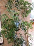 ロビーにあった植物