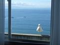 湯の川グランドホテルの窓に来たカモメ