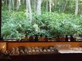 新富良野プリンスホテル「森の時計」(喫茶)