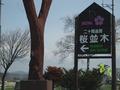 日本の桜百選「二十間道路桜並木」の看板