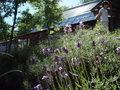 ペンションのりくらの庭園