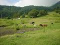 奥山田温泉満山荘の前に広がる池と牧場