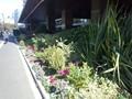 帝国ホテル正面入り口の花壇(植栽)