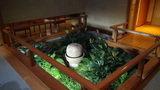 嵯峨沢館の室内にある「坪庭」