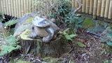 嵯峨沢館の庭にあったカエルの置物