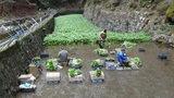 「浄蓮の滝」のわさび田