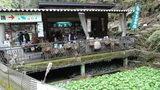 「浄蓮の滝」滝壺近くの売店