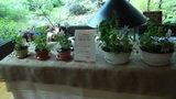 清里高原ホテルのロビーで販売していたハーブの寄せ植え