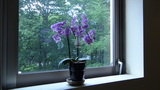 清里高原ホテルの廊下に飾ってある花