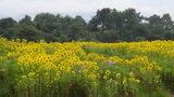 清泉寮の牧場側のお花畑