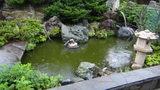 はぼろ温泉サンセットプラザの大浴場「日本海」から見える池のある庭