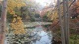 旧北海道庁「赤レンガ」前の池