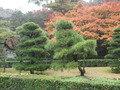 伊勢神宮内の庭園です
