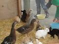 ウサギたちの視線の先には・・・