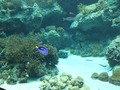 美ら海水族館のサンゴ&熱帯魚