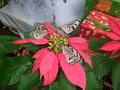 琉球城蝶々園