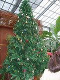 クリスマススリーも沖縄流