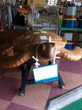 玄関の大きなウミガメ