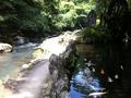 庭園内の池と川