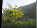 部屋からの景色2。天城側の山