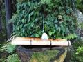 庭園内にあるわき水