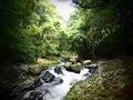 河津七滝 出会い滝に至る遊歩道沿いの清流