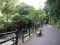 河津七滝巡りの遊歩道