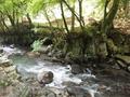 河津七滝巡りの途中の清流