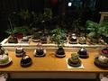 正面玄関横の観葉植物展示