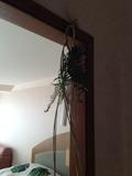 部屋の入り口。正月用しめ縄