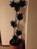 館内廊下の観葉植物