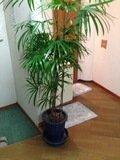 男風呂脱衣所の観葉植物