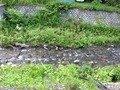 宿の前を流れる川