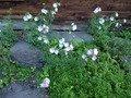 本館脇の花壇