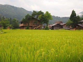 宿の周辺は青々とした田んぼが広がっています。