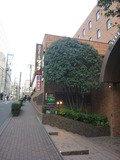 ホテル正面入り口横の植え込み