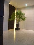 1階ロビー片隅の植木