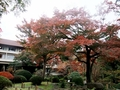 一万坪の回遊式日本庭園