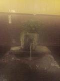 温泉吐湯口