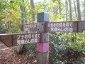 ブナの原生林見学ツアー