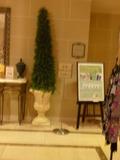 エステルームの入り口横のモミの木