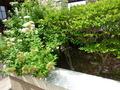 中華レストランの小庭の植物