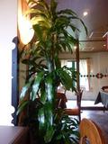 イタリアンレストラン入り口手前の観葉植物