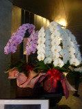 ホテル入口に飾られた、大きな胡蝶蘭
