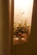エレベーター横のステキなお花