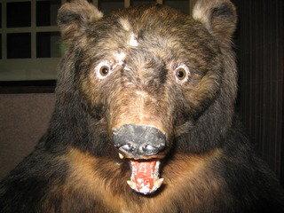 熊の剥製 フロント横にありました