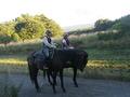 宿から2㎞ 乗馬体験が出来ます