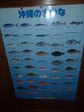沖縄の魚のポスター
