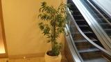 エスカレータ横の植木