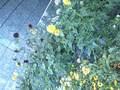 ビルの花壇